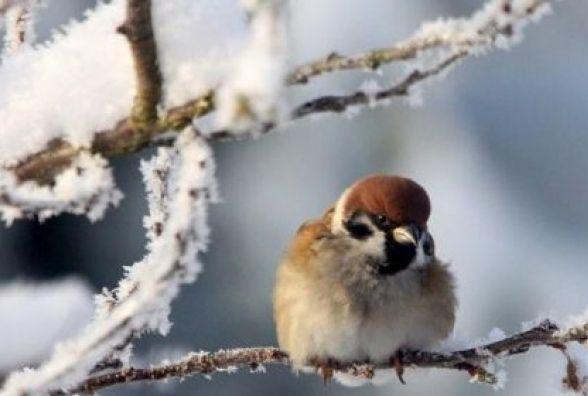 Миколай принесе морози: з понеділка, 18 грудня, до Хмельницького прийде похолодання