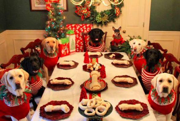Новорічний стіл за рік подорожчав на 500 гривень. Скільки хмельничани витратять на Собаку