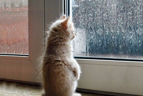 Сніг з дощем та відлига: синоптики розповіли, яким буде тиждень у Хмельницькому