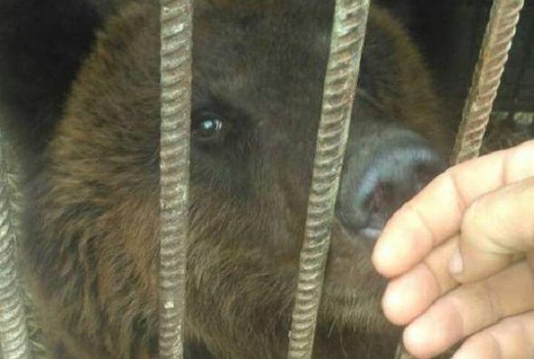 """""""Цирк без тварин"""". Покинуті чотирилапі артисти селяться у приватному зоопарку Пальохіна"""