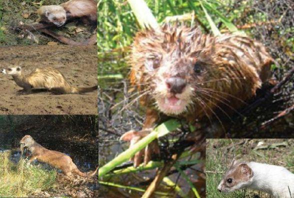 Зникаючі й рідкісні види тварин: кого з Червоної книги знаходили на Хмельниччині