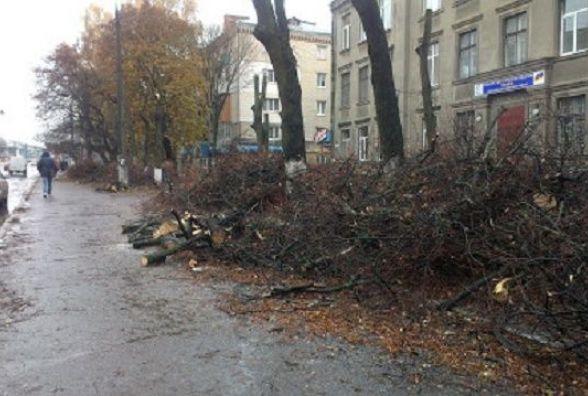 """""""Не омолодження, а знущання"""": хмельничанка Віка просить не псувати дерева у місті"""
