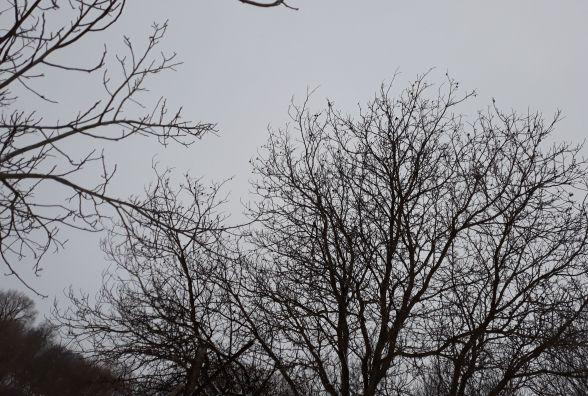 """""""Погода хмельничан не розчарує,""""- синоптики розповіли,  яким цьогоріч буде Великдень"""
