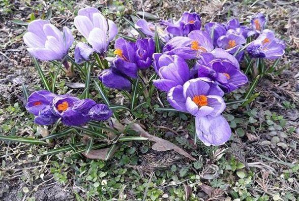Багато сонця та тепла обіцяють синоптики хмельничанам у середу, 11 квітня