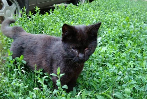 """Хмельницькі волонтери хочуть, щоб """"Спецкомунтранс"""" стерилізував не тільки собак, а й котів"""