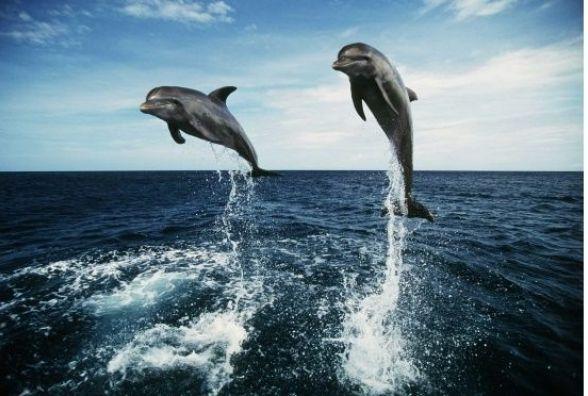 23 липня - Всесвітній день китів і дельфінів
