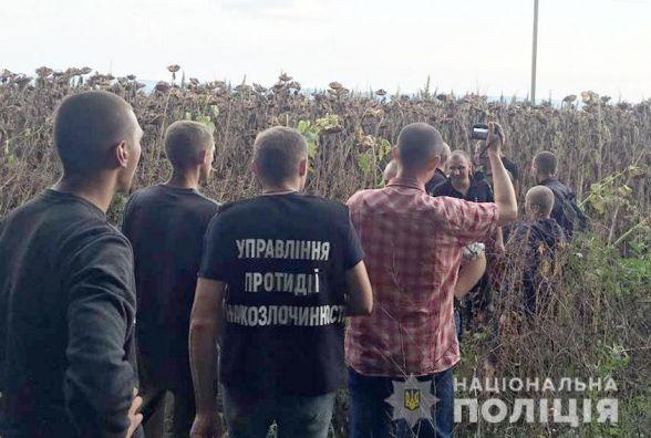 У Летичівському районі серед поля з соняшником знайшли величезну плантацію конопель