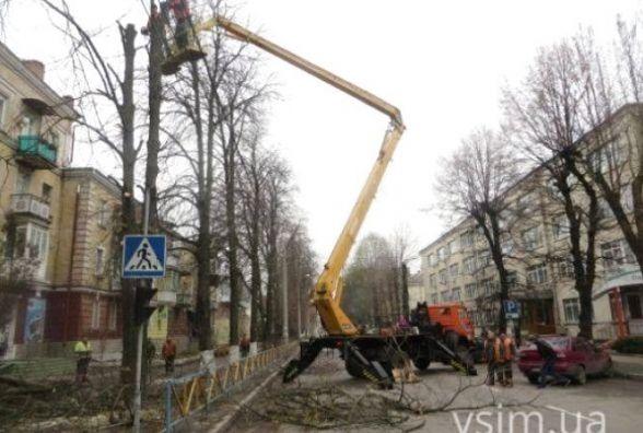 На вулиці Курчатова майже місяць будуть омолоджувати дерева