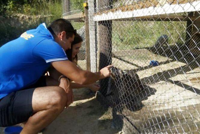 """У приватному зоокутку Пальохіна поселився ведмідь. А на фото з левенятами встановили """"таксу"""""""