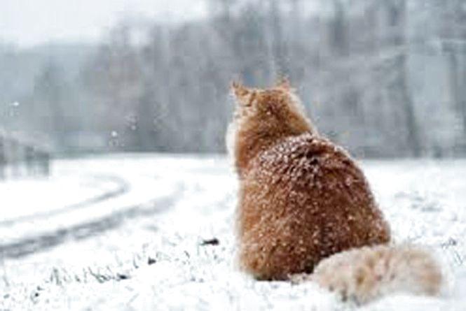 У Хмельницькому 4 січня можливий сніг
