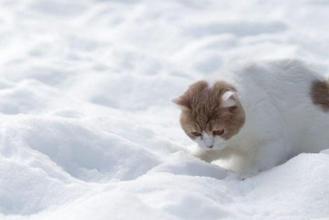 У понеділок, 30 січня, в Хмельницькому без опадів