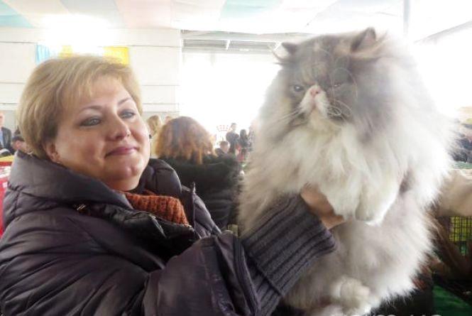 Навесні у Хмельницькому відбудеться виставка котів