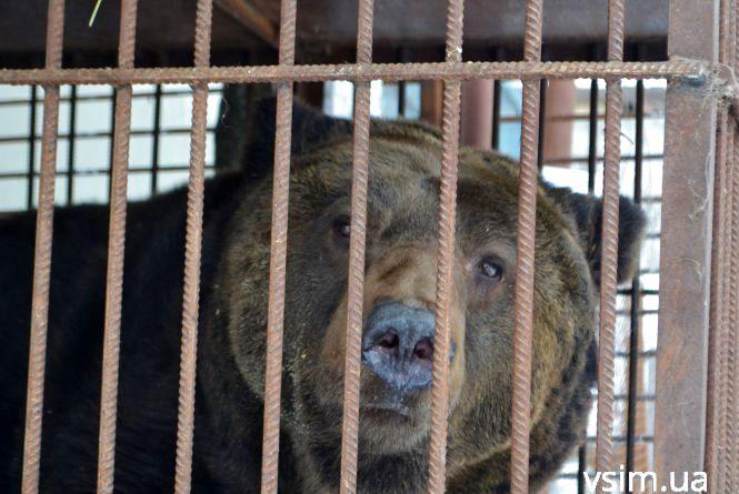 У хмельницький зоопарк привезли бурого ведмедя Стефана