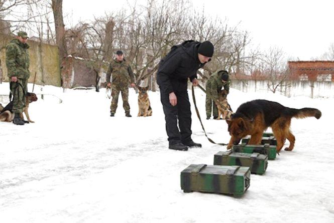 Поліцейських собак з Хмельниччини вчили шукати зброю та наркотики
