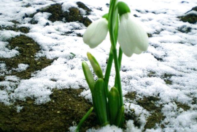 У Хмельницький йде весна. Прогноз погоди на тиждень