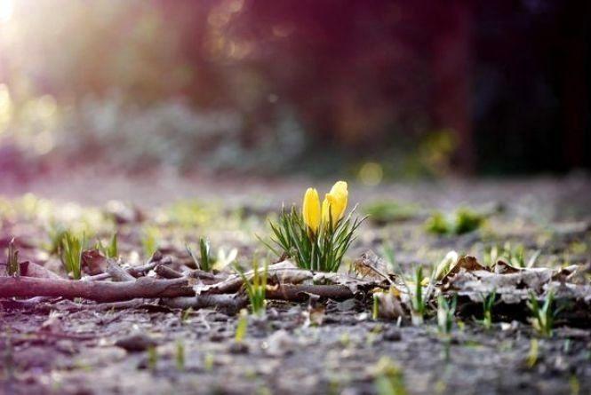 В останній день зими в Хмельницькому ясно і без опадів