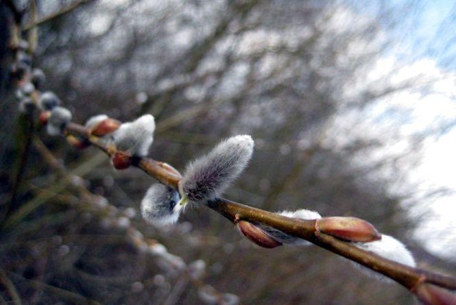 13 березня у Хмельницькому без опадів