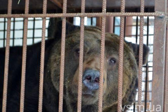 Ведмедя Стефана ніяк не можуть забрати в Закарпаття - немає грошей