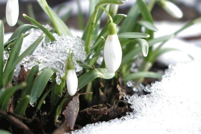 17 березня у Хмельницькому можливий дощ