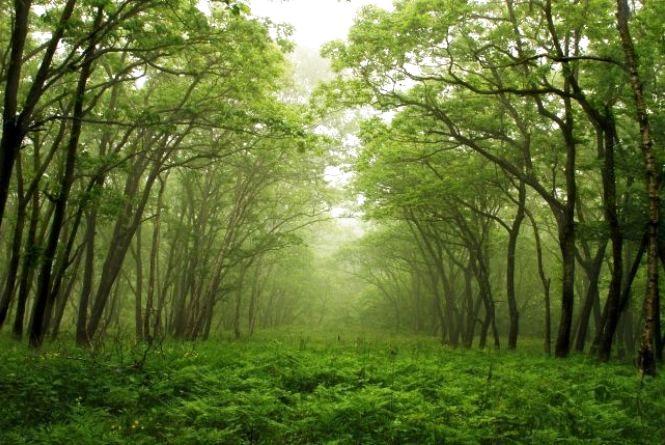 21 березня - Міжнародний день лісів