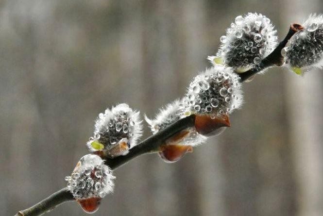 9 квітня у Хмельницькому ясна погода