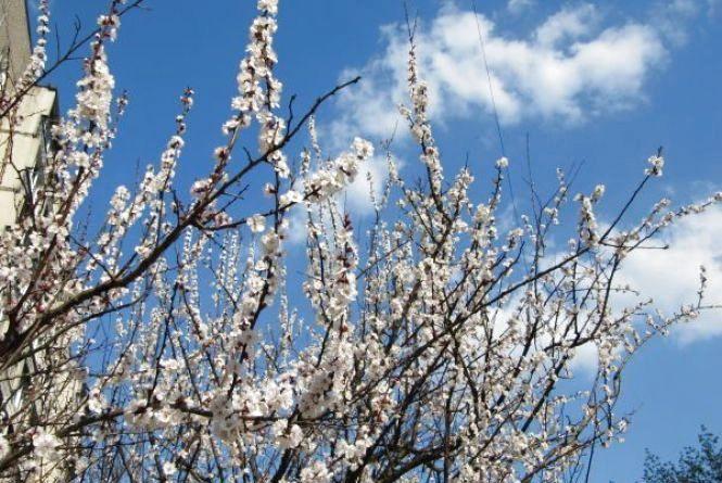 10 квітня у Хмельницькому без опадів