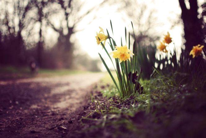 11 квітня у Хмельницькому можливий дощ