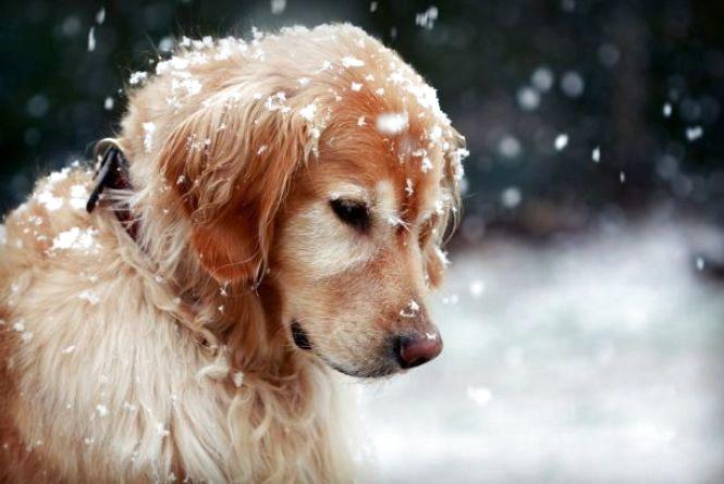 Погода на тиждень: у Хмельницькому прогнозують заморозки і дощі зі снігом