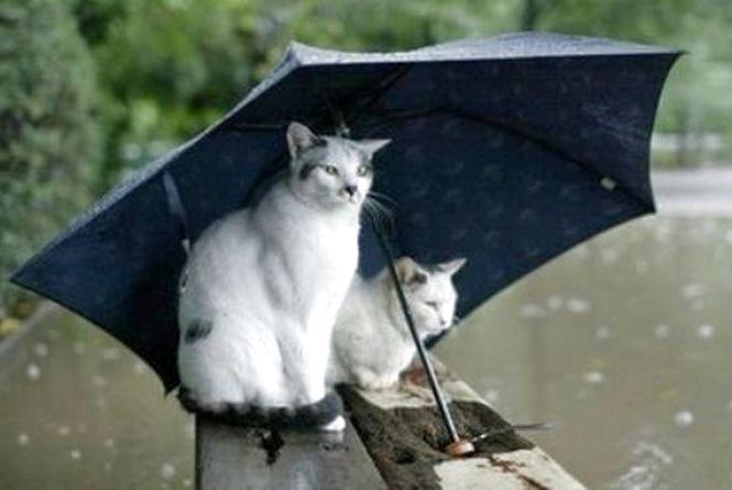 Чотири дні на відпочинок: якою буде погода у Хмельницькому