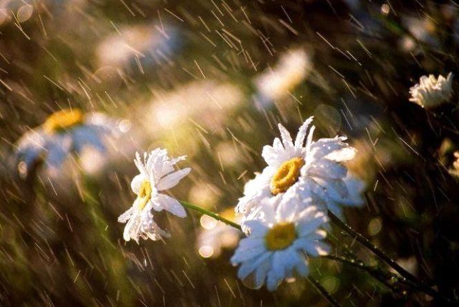 12 травня у Хмельницькому можливий дощ