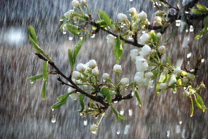 У суботу, 13 травня, в Хмельницькому дощитиме