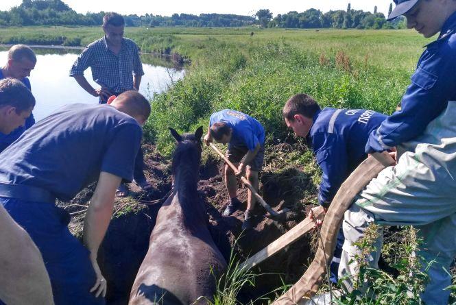 У Теофіпольському районі кінь застряг в канаві