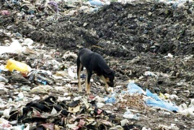 """В Хмельницькій ОДА розповіли про """"відписки"""" Садовому  і чому занедбали свої сміттєзвалища"""