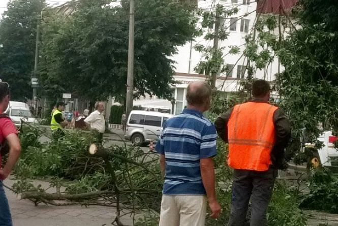 На Старокостянтинівському шосе на дорогу впало дерево