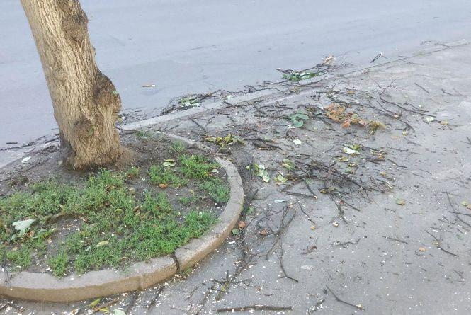 Поламані дерева та затоплені вулиці: що наробила негода у Хмельницькому