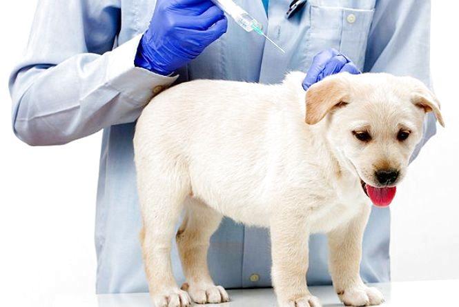 В липні у Хмельницькому безкоштовно щеплюватимуть собак і котів
