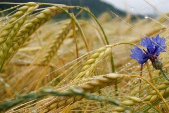 Що радять робити у свято Іллі і чого не можна