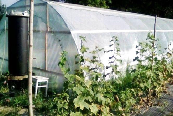 У 43-річного селянина з Хмельниччини знайшли теплицю з коноплями