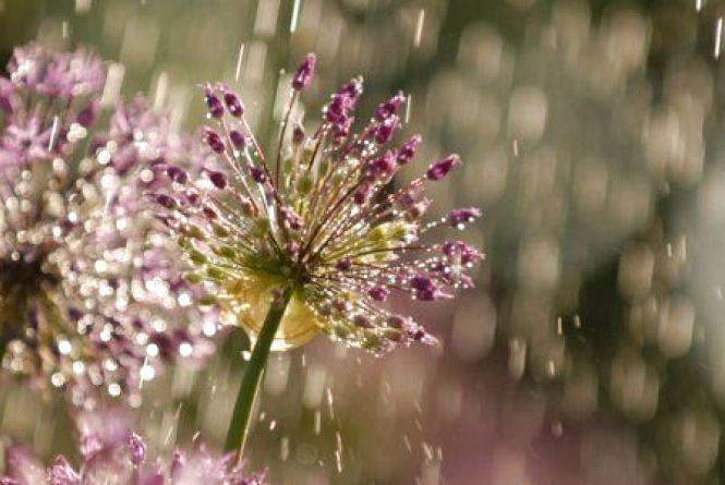 Погода на тиждень: синоптики прогнозують хмельничанам дощі і прохолоду