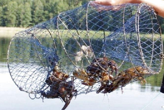 До середини листопада хмельничанам не можна ловити раків