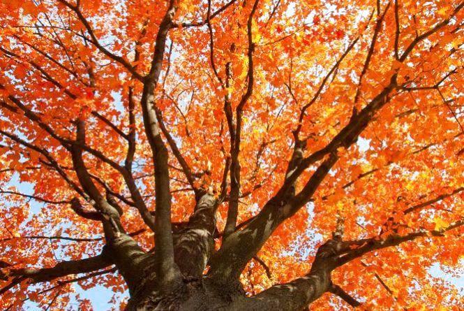 13 жовтня - Михайла. Як сьогодні вигнати негатив з дому, а хвороби з тіла