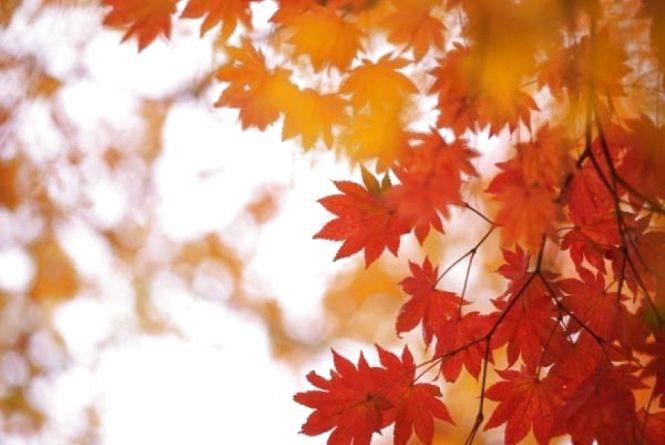 17 жовтня - Єротея. Що сьогодні робити, аби апетит завжди хороший мати