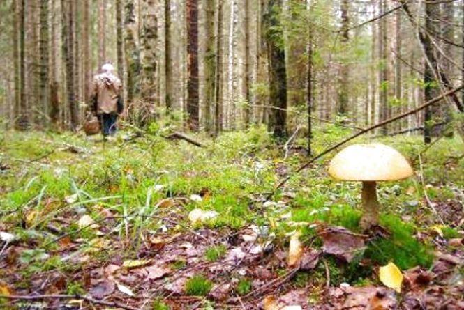 У Славутському районі пенсіонерка пішла по гриби і заблукала