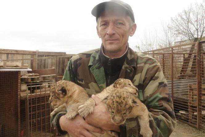 Троє маленьких левенят у приватному зоопарку вчаться ходити і гарчати (ФОТО/ВІДЕО)