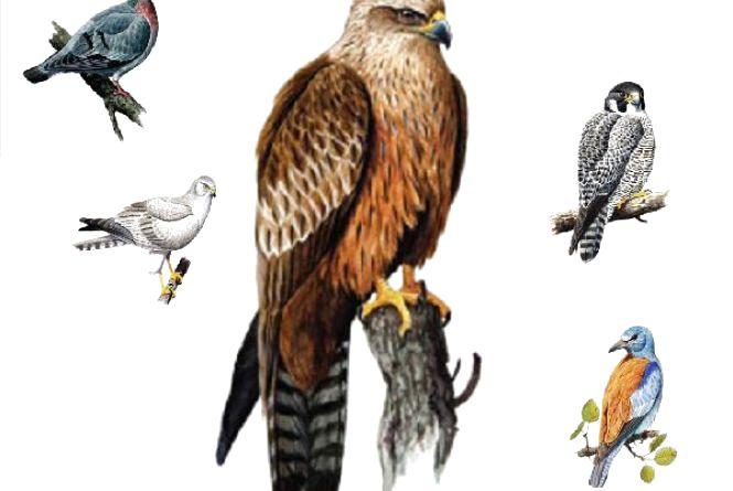 Зникаючі й рідкісні види птахів: кого з Червоної книги можна зустріти на Хмельниччині