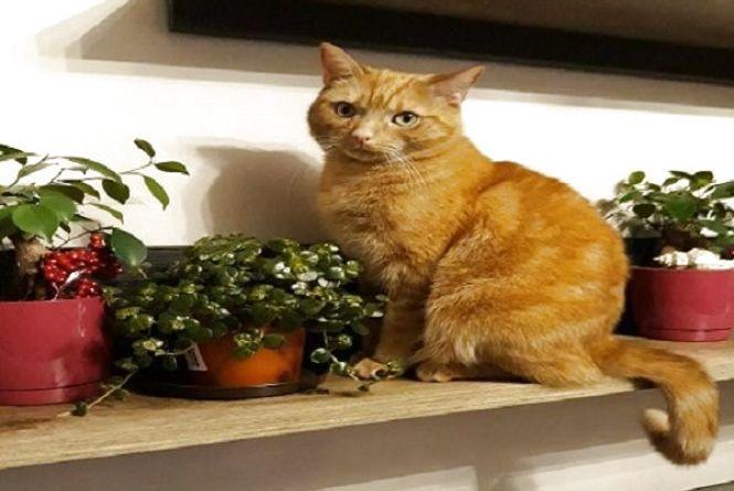 Свято вусатих та хвостатих: 1 березня відзначають Всесвітній день котів