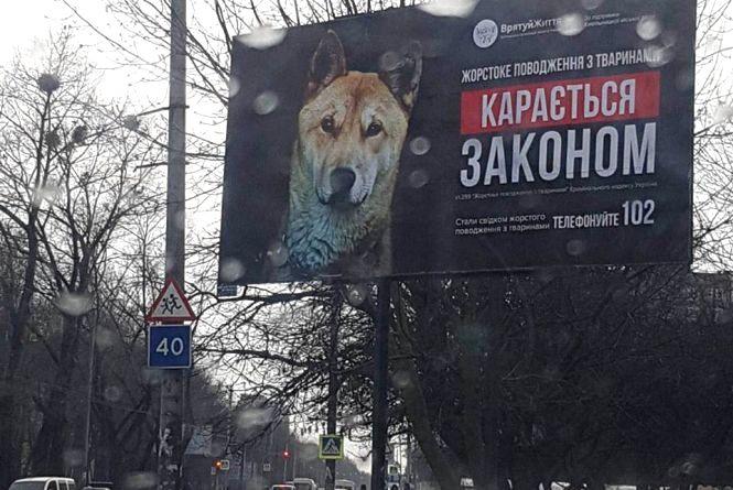"""""""Вірність не купиш за гроші"""": у Хмельницькому з'явилися бігборди з безпритульними собаками"""