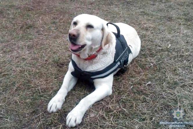 Поліцейський собака з Хмельниччини допоміг знайти зниклу дитину