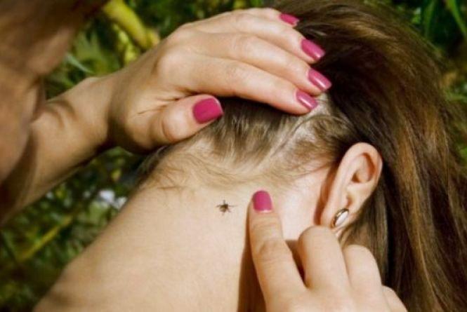 Небезпечні кліщі: від укусів хворобою Лайма інфікувалися 11 хмельничан