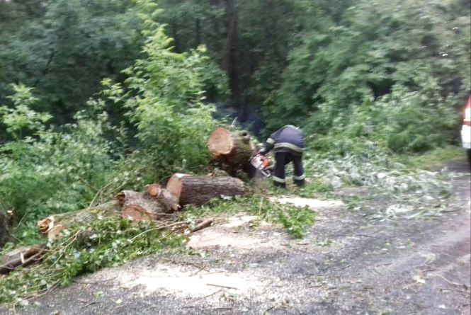 Затор через негоду: на Ізяславщині повалене вітром дерево паралізувало рух на дорозі
